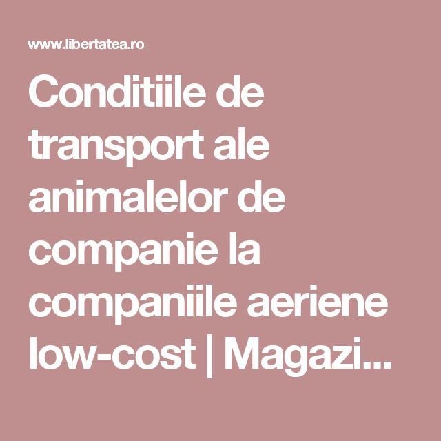 Conditiile de transport ale animalelor de companie la companiile aeriene low-cost   Magazin, Ştiri   Libertatea.ro