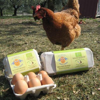 confezioni con gallina 5 (400x400)