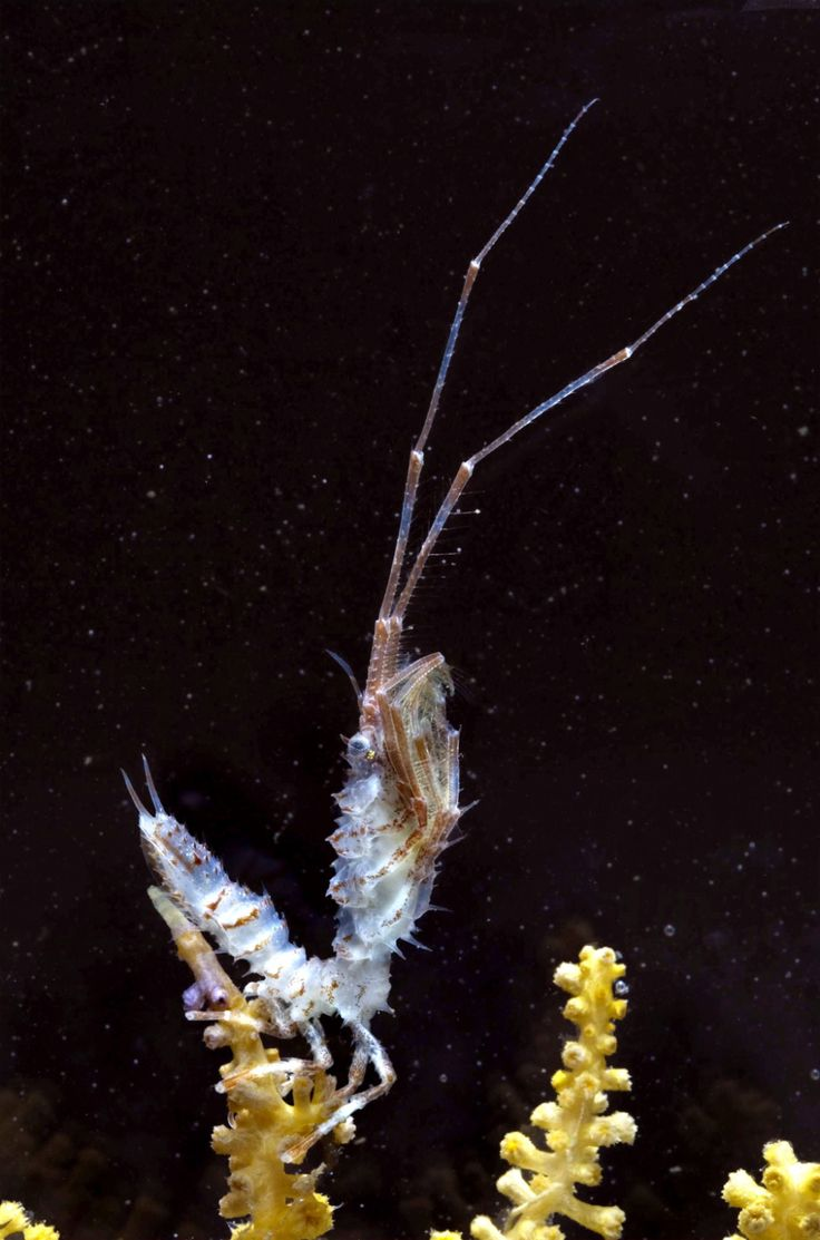 72 best images about deep sea creatures on pinterest for Deep sea fish