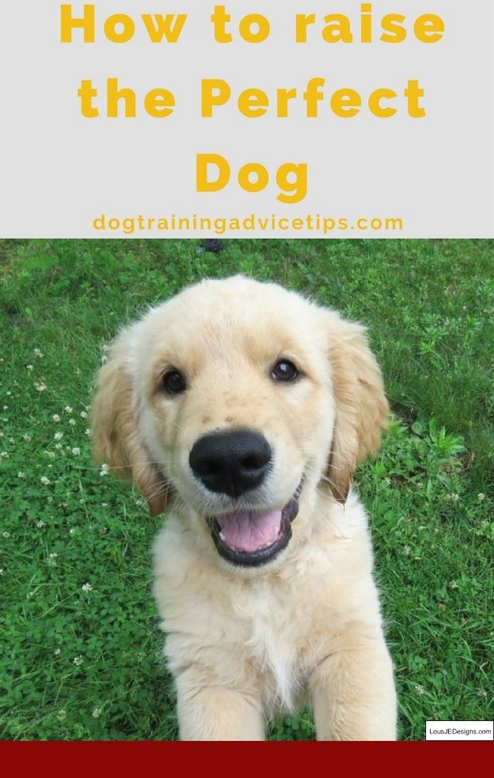 Dog Training Top Tips And Pics Of How To Potty Train My 1 Year Old