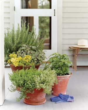 great tips for potting herbs together!