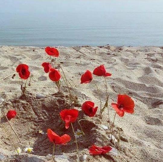 Platamon, Pieria, Greece! photo: Christina Chatzara