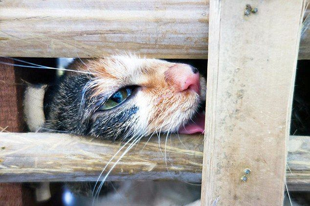 Animal rescue group saves 1K cats on their way to Chinese slaughterhouses.