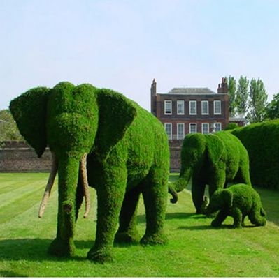 Topiary elephants -- Someday I want a Giraffe in my front yard, peeking over my picket fence to the road. :)