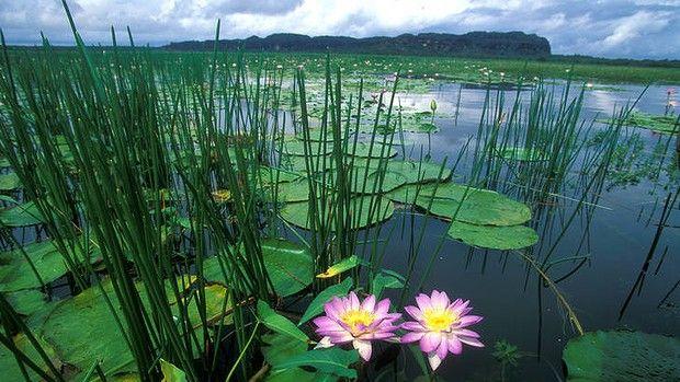 Cooper Creek Lagoon in Arnhem Land - Northern Territory, Australia
