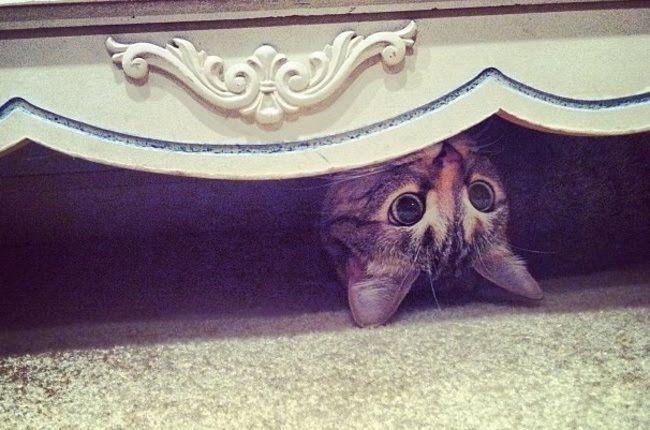 Cultura Inquieta - Gatos ninja maestros del arte del escondite