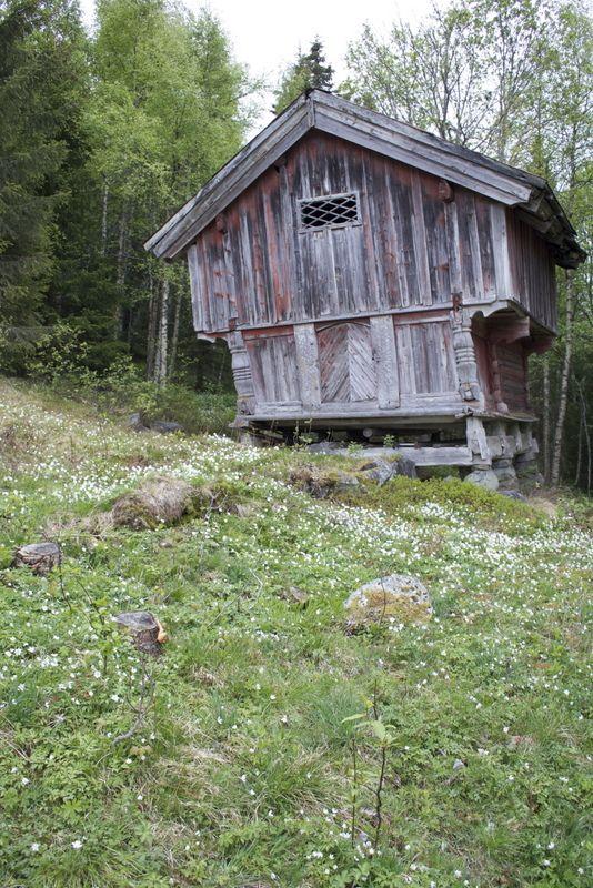 Det er noen ganger så jeg nesten savner gårdsjakten vi var på. I alle fall alle turene. Som denne. Snøen hadde smeltet, hvitveisen lå so...