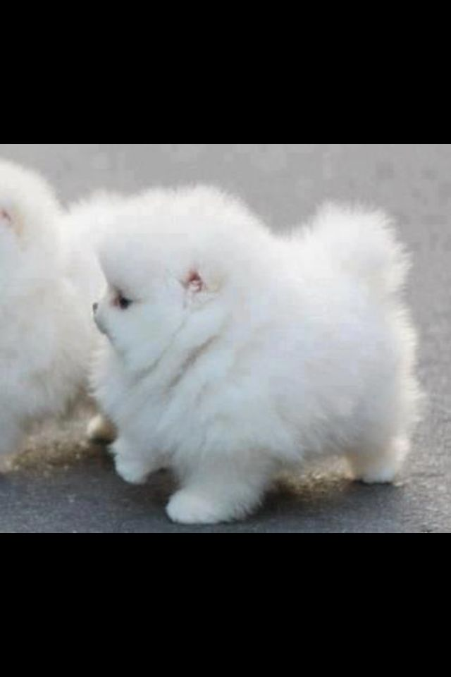 fat fluffy doggie puppy