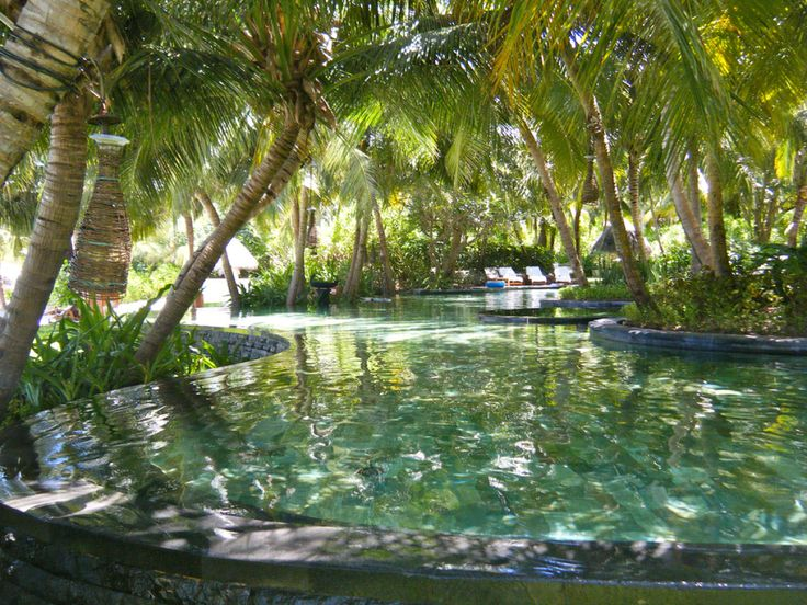 1000 Ideas About Tropical Pool On Pinterest Garden Pool