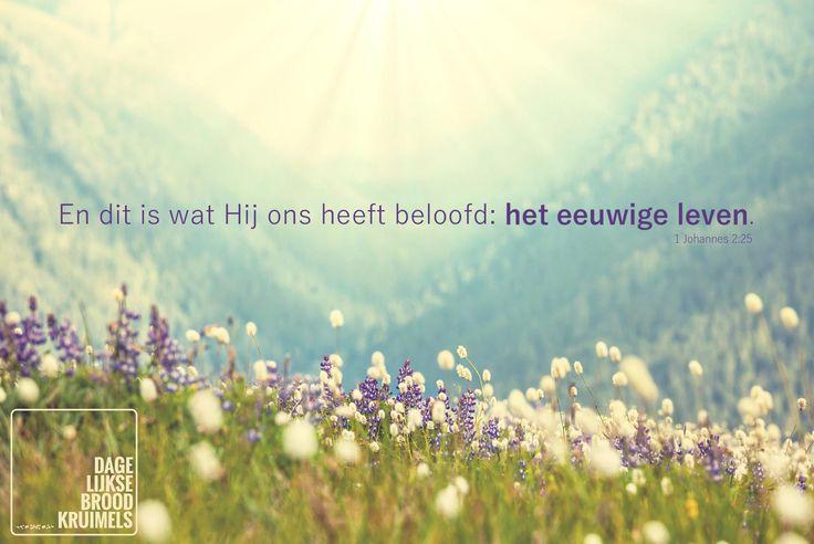 En dit is wat Hij ons heeft beloofd: het eeuwige leven. 1 Johannes 2:25 #EeuwigLeven http://www.dagelijksebroodkruimels.nl/1-johannes-2-25/