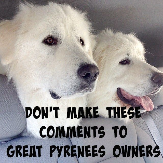 Homemade Dog Food For Great Pyrenees