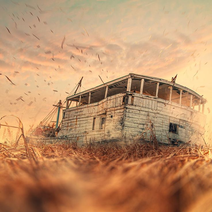 The barber wheat by Ionu? Cara? on 500px Photographs4 Pinterest ...