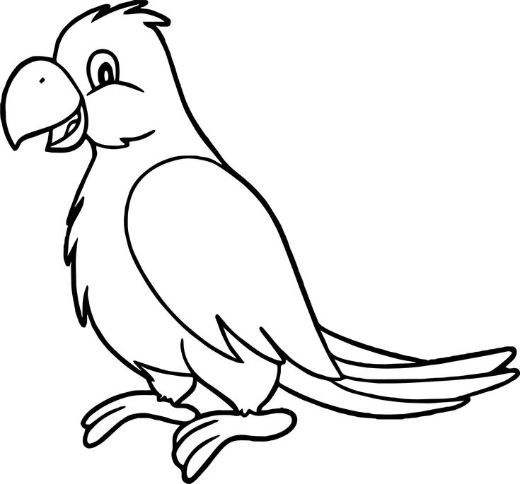 Sweet Parrot Coloring Page | Bird coloring pages, Coloring ...