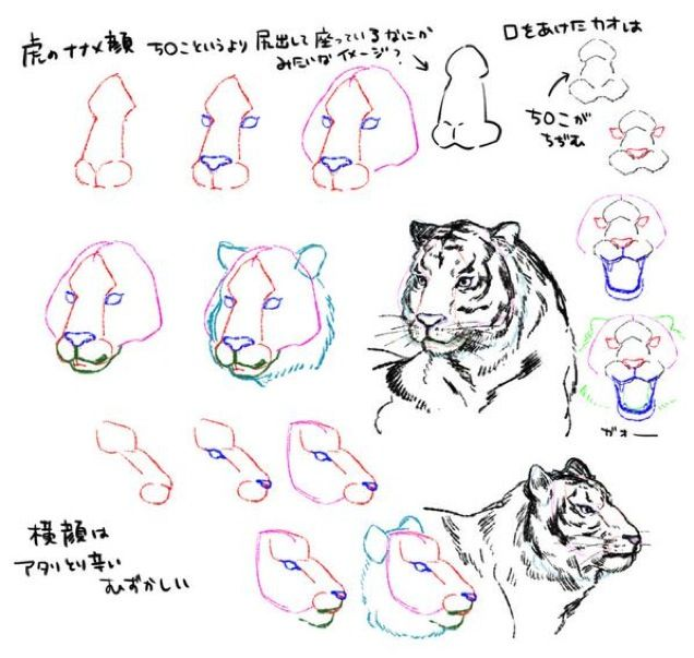 best 20 how to draw tiger ideas on pinterest how to