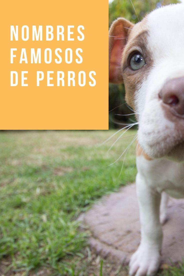 103 Nombres De Perros Famosos Influencers Nombres De Perros Nombres De Perros Famosos Nombres Para Perros Machos