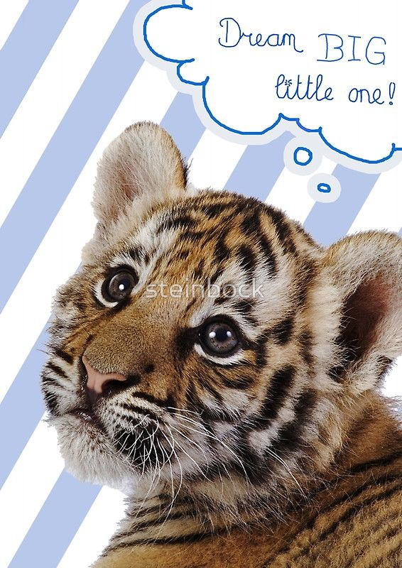 Dream BIG little one! (blue)... love this one! Baby tiger, cool for kids or nursery room....