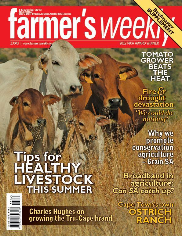8 November - 'Tips for healthy livestock this summer'