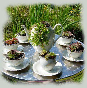 Sukkulenten im Kaffeekanne und Kaffeetassen 1