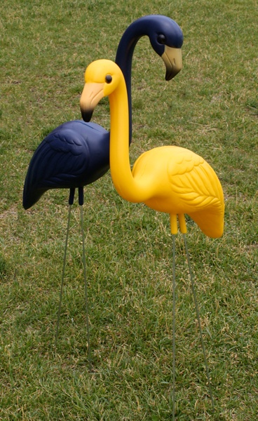 Love these - what better way than Blue and Gold Flamingos to bring school spirit to your yard!?!