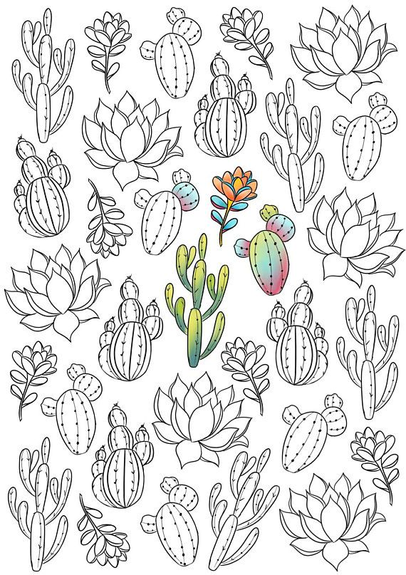 Adult Coloring Page Succulent Coloring Page Cactus Coloring