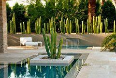 cactussen (robbertversteeg) Tags: border cactussen plantvak rotsbeplanting