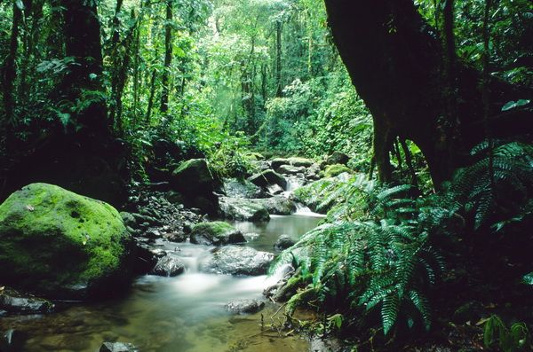 Darién National Park, Panama.