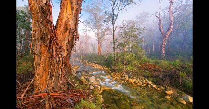 """""""Floresta Mística"""", de Mark Gray, mostra um riacho cercado de árvores de formas curiosas.  Fotografia: Mark Gray / BBC.  http://mulher.uol.com.br/casa-e-decoracao/album/2011/05/12/jardins.htm#fotoNavId=pr12730180"""