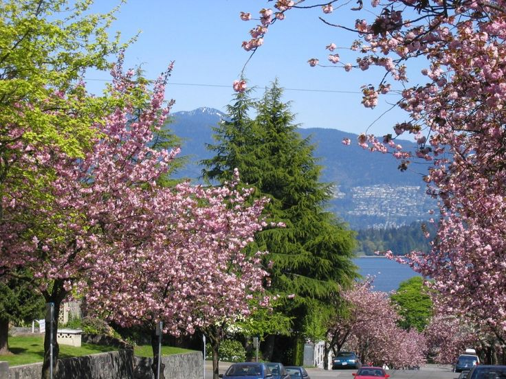 Kitsilano, Vancouver, British Columbia, Canada I miss those blooming cherry trees each spring!!!