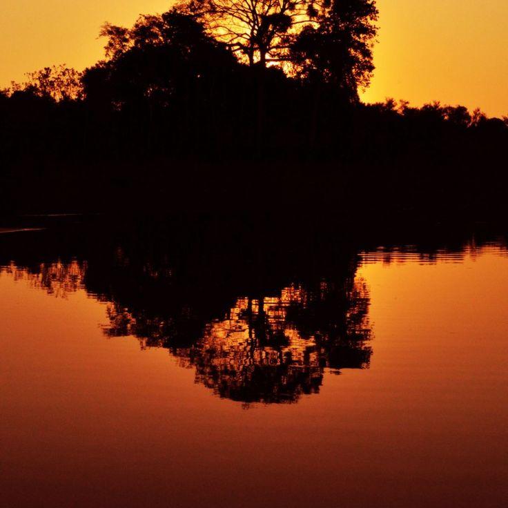 Hutan amazon adalah hutan yang memiliki ribuan spesies makhluk hidup di dalamnya, hutan amazon juga adalah rumah bagi sekawanan makhluk hidup tersebut. Hutan tersebut kaya akan tumbuhan, makanan, sumber air, dan hal yang lainnya... #africanrainforest #amazonrainforestfacts #amazonrainforestplants