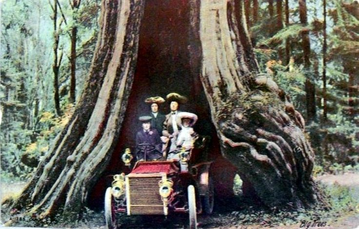 The Big Hollow Tree,  Stanley Park,  Vancouver British Columbia