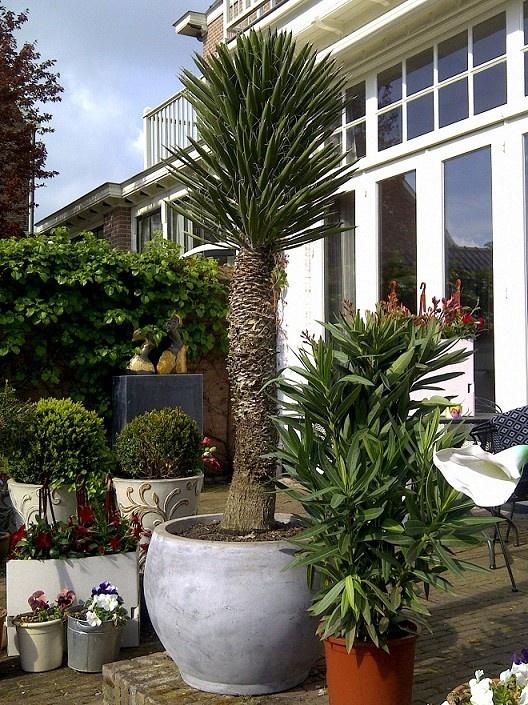 Mediterrane Tuin - Mediterranean Garden - Mediterraanse Tuin
