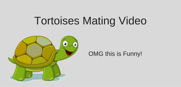 This #HomeVideo of my Kids seeing #TortoisesMating is hysterical... if you want a seriously good laugh you had better check out this post!   #FunnyVideo #FunnyHomeVideos