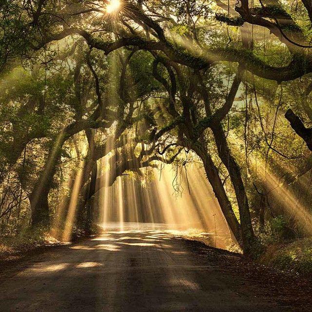 hdr espectaculares hub creativo camino en el bosque camino al cielo ...