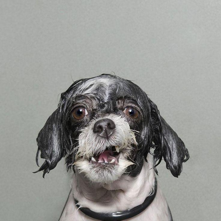 Wet Dog 3 / Sophie Gamand