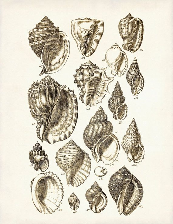 Seashells Print 4 - Beach Art Poster - Giclee Print - Digital Illustration - Nautical Art - Wall Hanging - Home Decor - Summer Art
