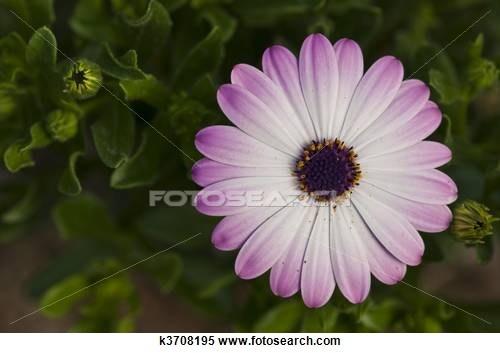 Purple flower in tuscany