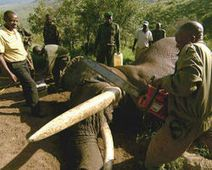 Stop poaching the African... - The Petition Site