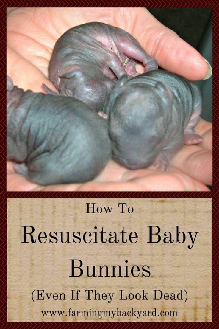 How to resuscitate baby bunnies even if they look dead