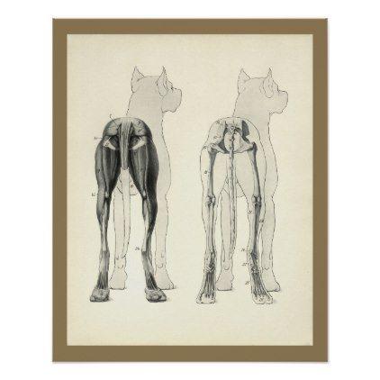 Dog Leg Skeleton Muscle Anatomy Print - vintage gifts retro ideas cyo