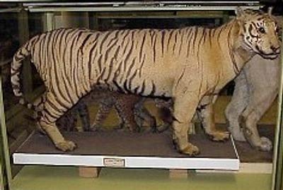 Animais Extintos - Fotos | Animais em Extinção