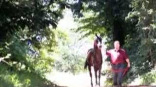 arabian horse tribute - YouTube