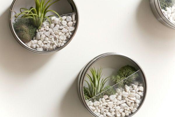 Mini Gärten für die Wand - Anleitung auf der Webseite