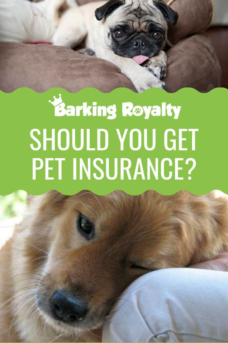 Is Pet Insurance Worth Getting Barking Royalty Dog Insurance
