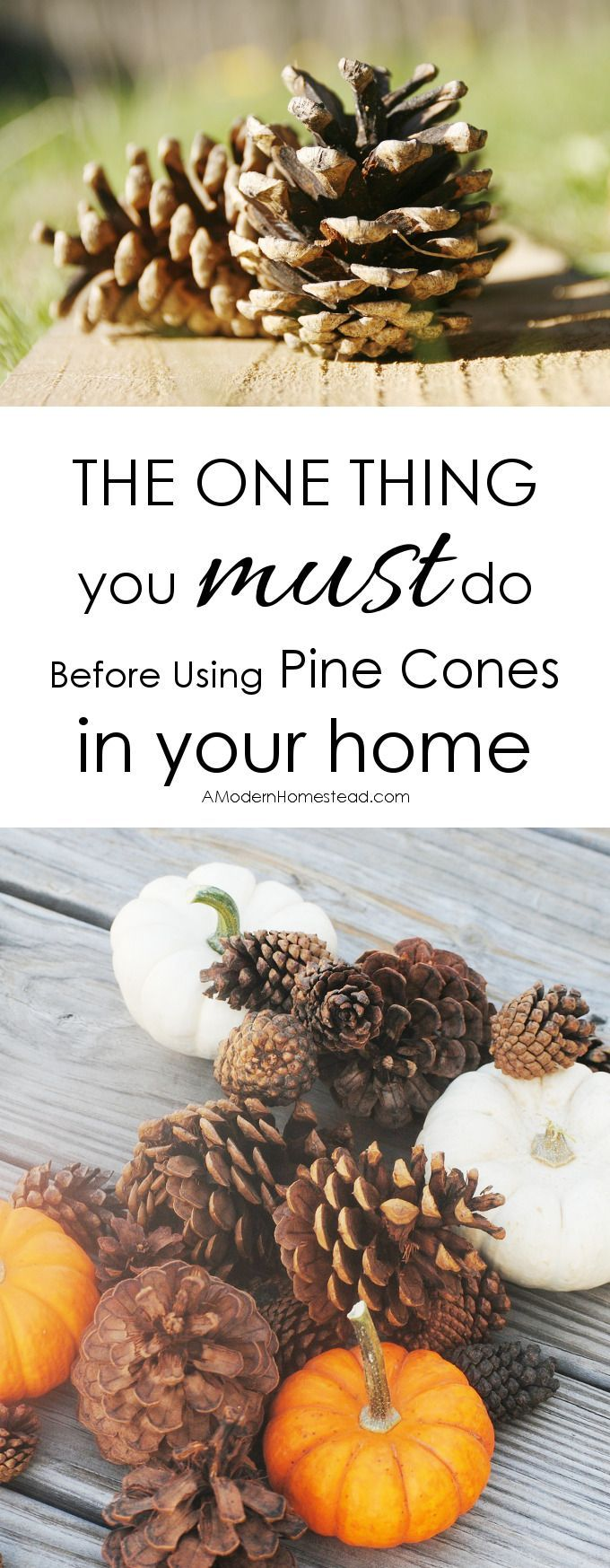 Don t forget that decorating the garden you must think about nature - The One Thing You Must Do Before Decorating With Pine Cones