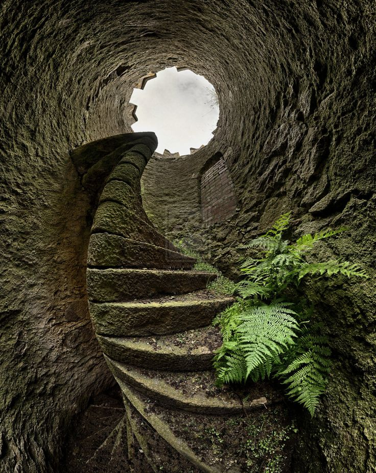 The lower world is often accessed through a tunnel or via the roots of a tree, or via a rabbit hole. :)  http://shamanstory.blogspot.com