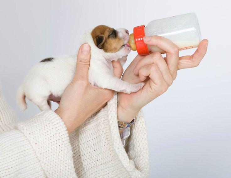 Selles blanches chez les chiots et chatons nouveau-nés : qu'est-ce que ça signifie ? – PROGRAMME PRIVILÈGE ÉLEVEURS