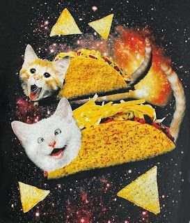 """kitty wearin' a taco, kitty wearin' a tacooo; he's eatin' salsaaa, and wearin' a taco..."""
