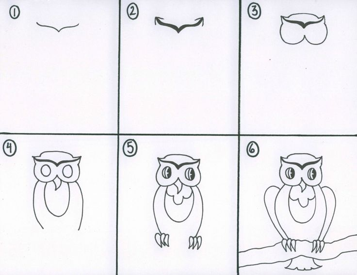 How to draw an owl google search owls pinterest for Step by step drawing an owl