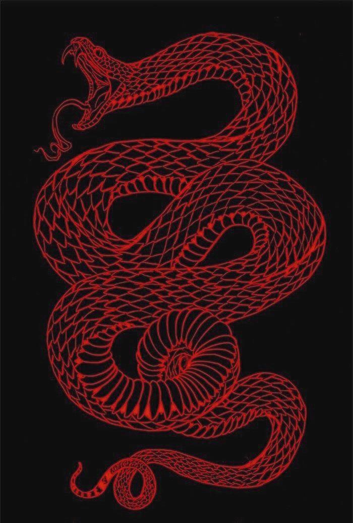 aesthetic snake wallpaper edgy wallpaper