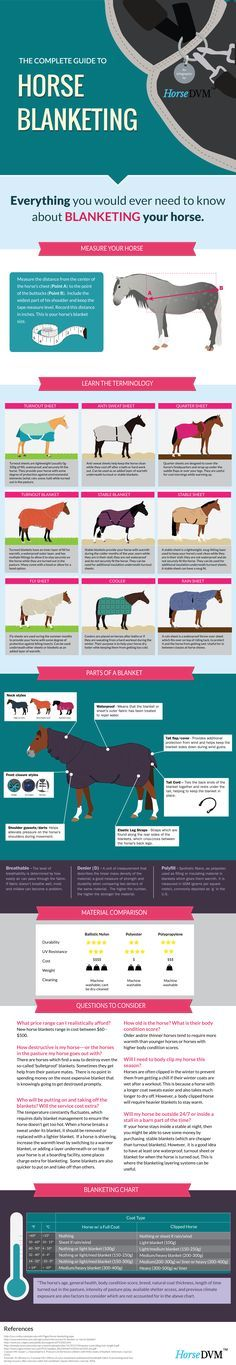 Horse Facts for Kids - Learn about horses for children ...